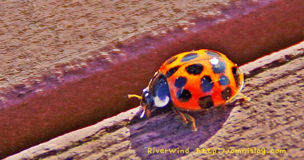Text Cube : 무당벌레 겨울나기 -ladybug::OmnisLog