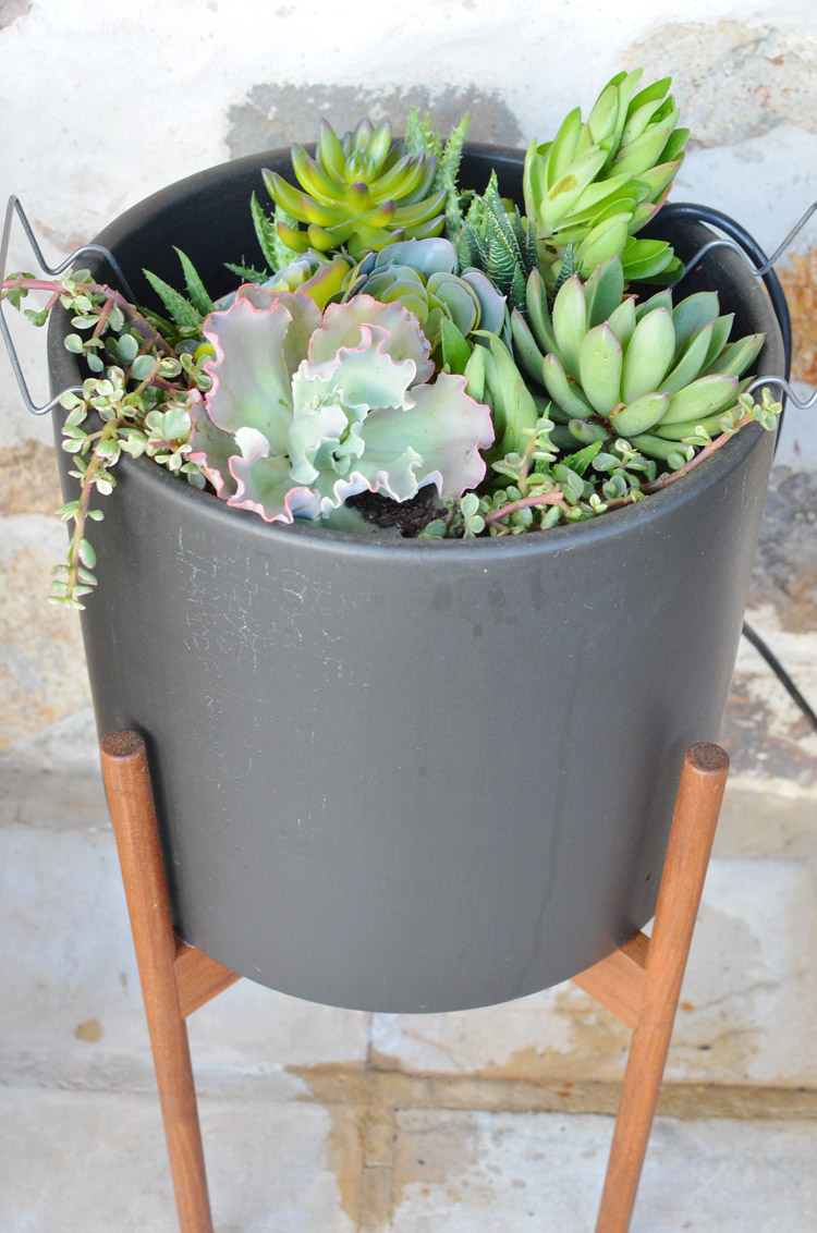 Modernica PLanter Costa Farms Succulents Stonecrest Front Porch Photo by Amy Renea at A Nest for All Seasons
