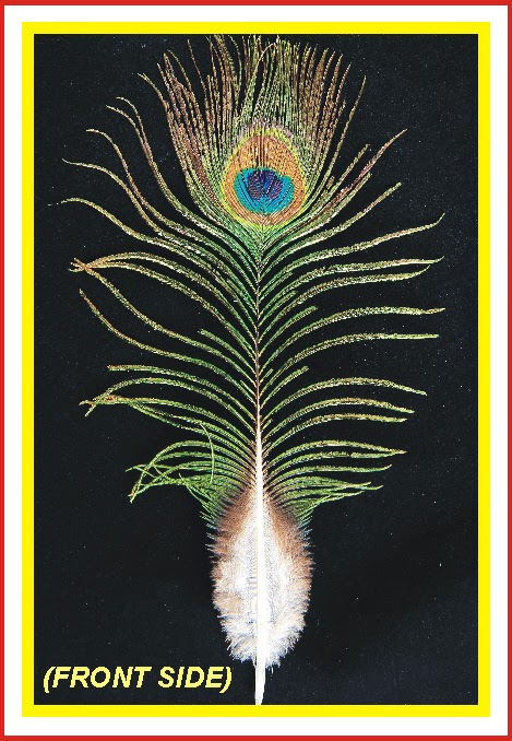 Peacock feather krishna