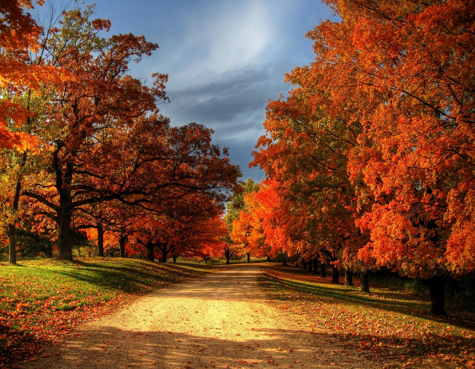 leaves autumn fall faith hope trees scenes autum colors season scene foliage fallen night falling country summer winter road beauty