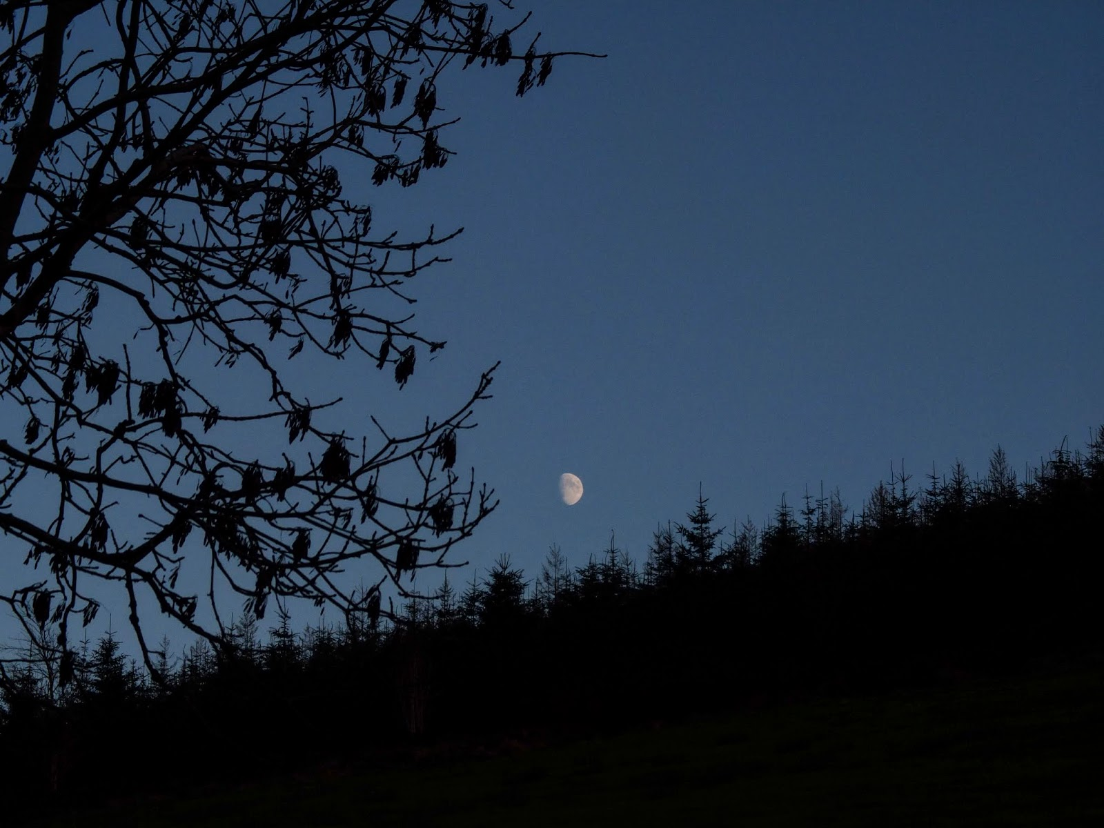 Moon rise over a forestry in North Cork.