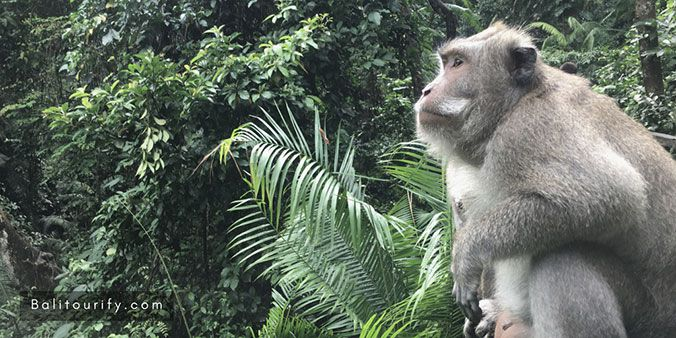 Alas Kedaton Monkey Forest, Tanah Lot Temple tour, Tanah Lot sunset tour, Bali Half Day Tours Itinerary