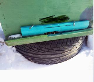 Μπλοκάρισμα εισόδου με νεκρές απο τον πάγο μέλισσες