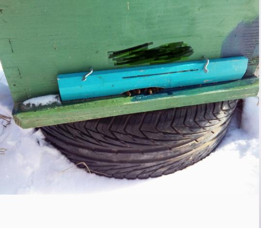 Μπλοκάρισμα εισόδου με νεκρές από τον πάγο μέλισσες