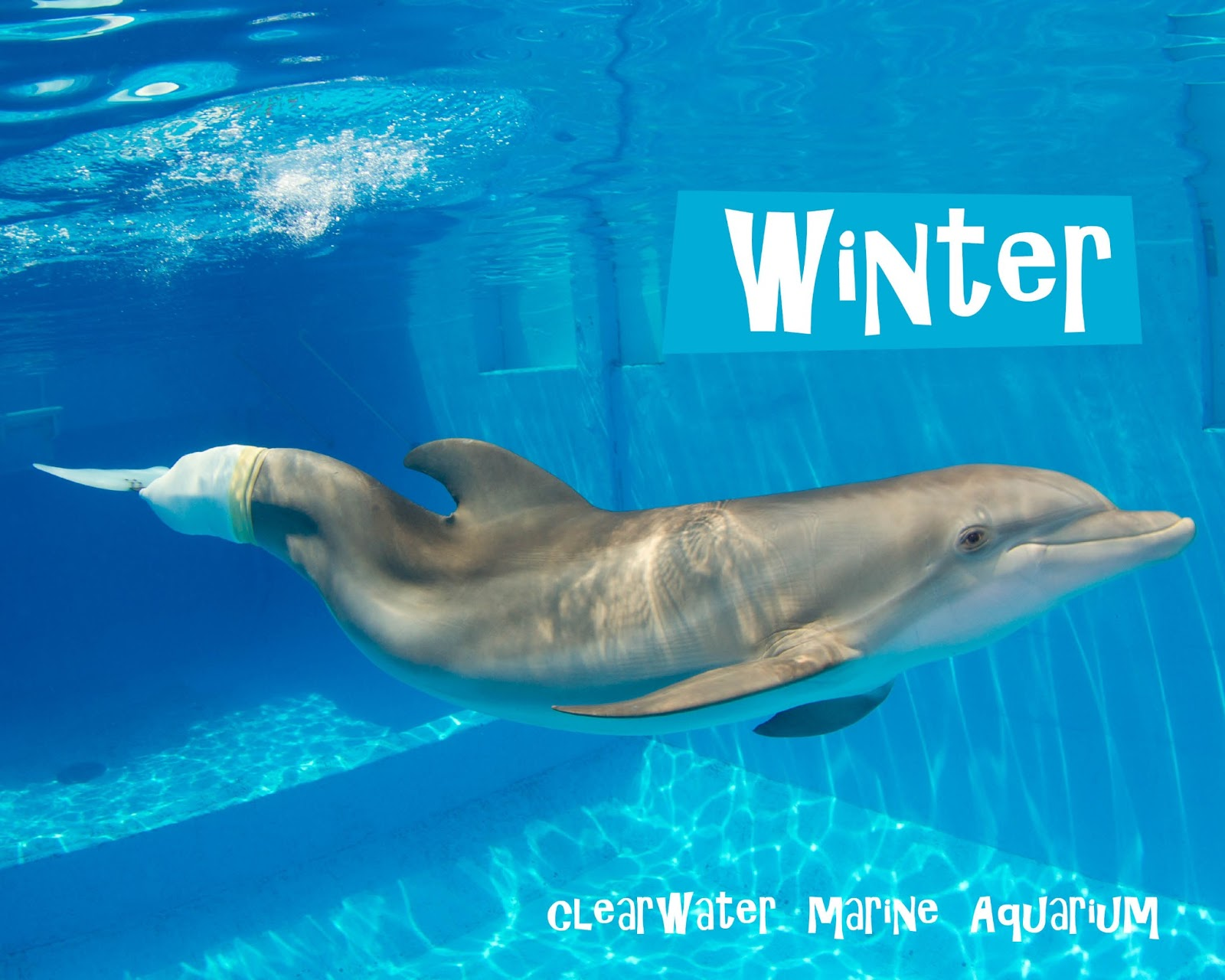 The glam green girl dolphin tale winter for Winter the dolphin coloring pages