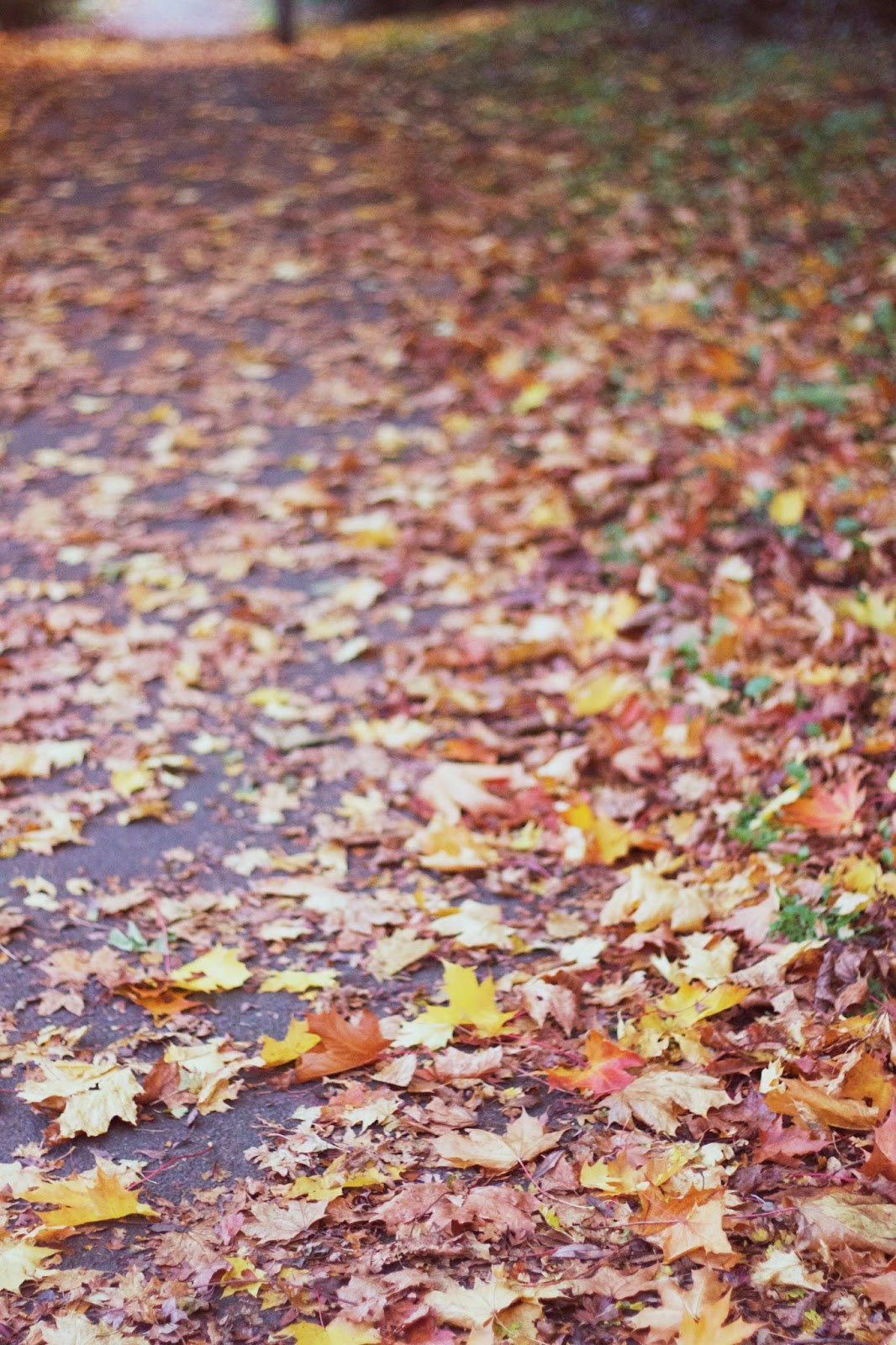 Leaves, Pile of leaves, Leaf, Autumn, Fall, Belper, Katie Writes,