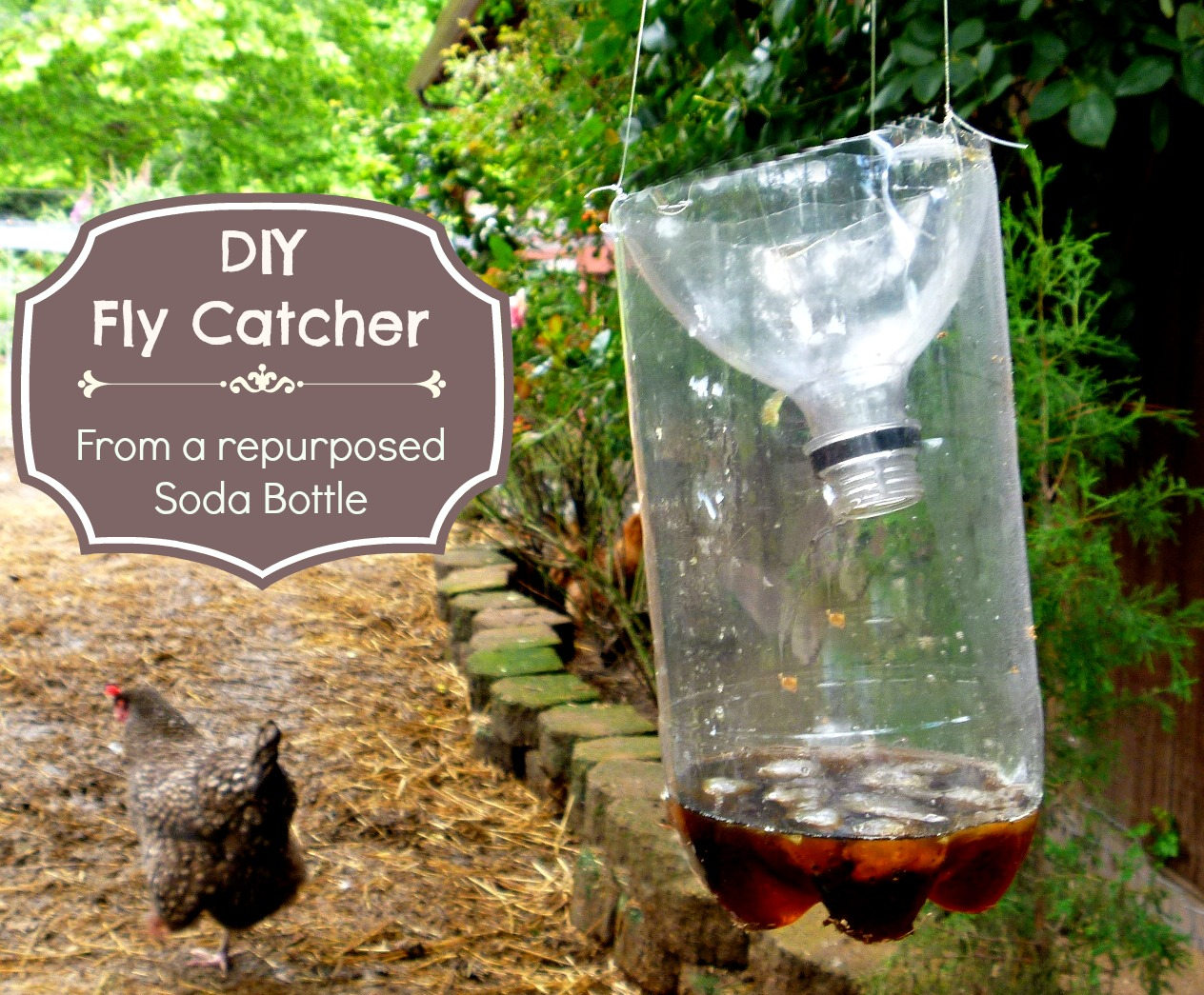 Ground Sheet Bunnings Got Flies Make This Easy Diy Fly Catcher Out Of A Soda