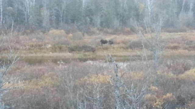 We had a history canada, moose Hunting