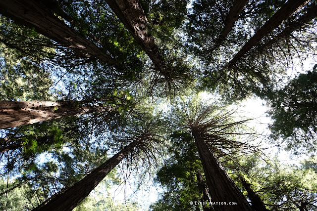Muir Woods, San Francisco USA #Eyespiration photo walk