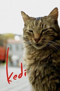 cat-kedi