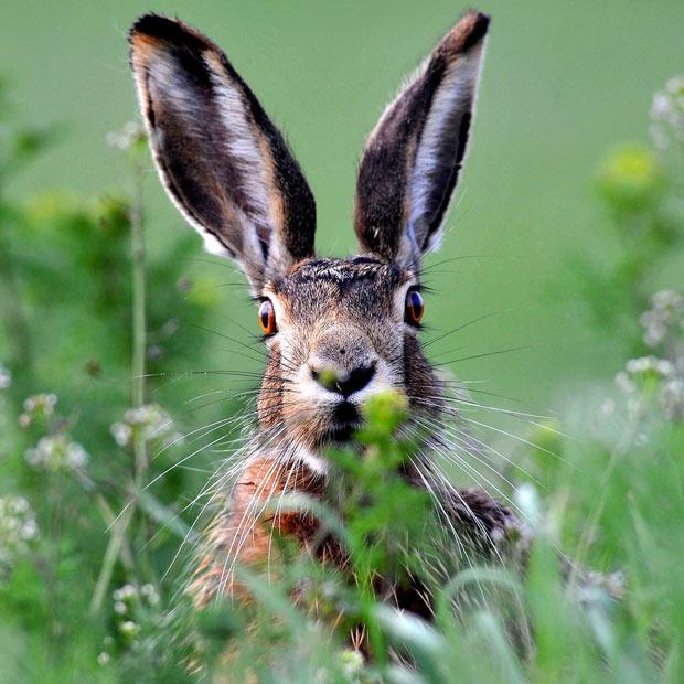 20 Very Strange Endangered Animal Species ~ World Information  |Very Interesting Animals