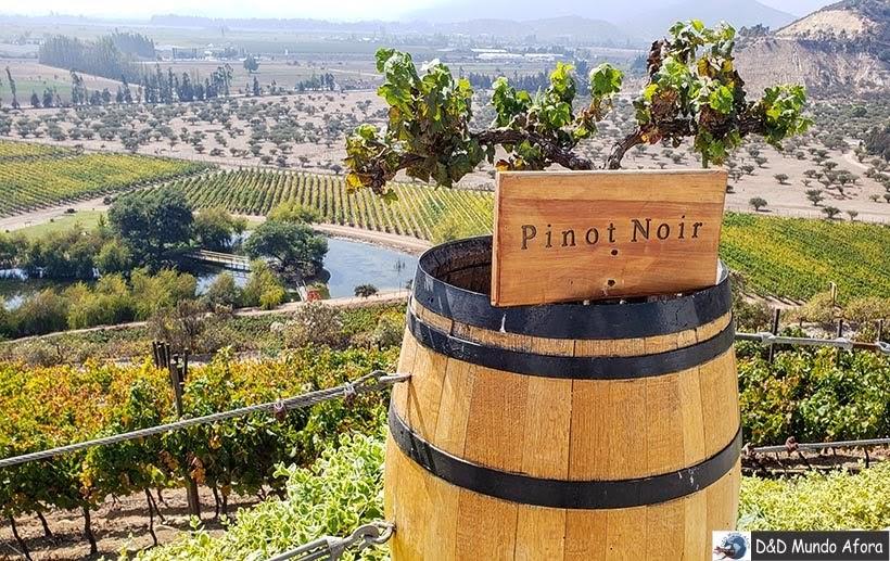 Pinot Noir na Vinícola Indomita. Vinícolas chilenas: Valle Casablanca e Concha Y Toro.