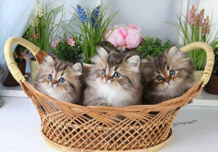 Gatito con flores
