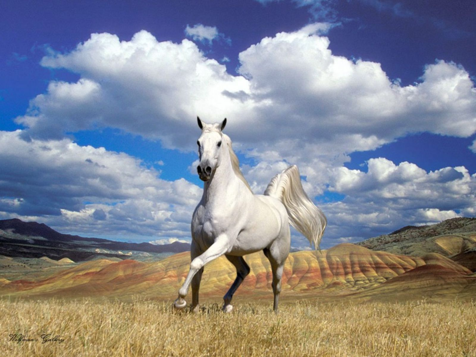 Beautiful White Horse Hd Wallpapers/Images 2013 | Top hd ...  Beautiful White...