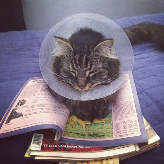 Kissa makaa nuolemisenestokauluri päässä lehtikasan päällä