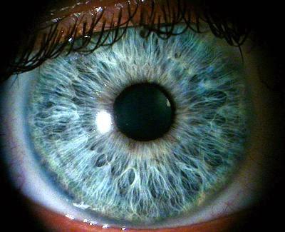an eye ball