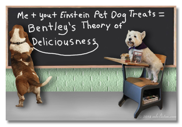 Bentley Basset on hind legs writing on chalkboard while Pierre Westie observes from a school desk.