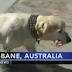 ΓΙΑ ΕΝΑ ΚΟΚΚΑΛΟ! Τι κάνει ένας σκύλος...