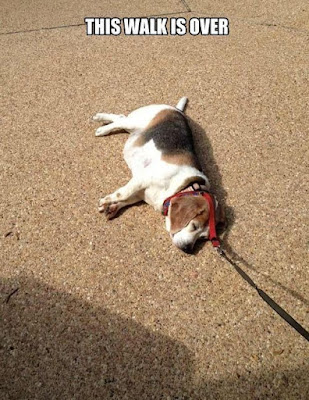 Funny dog pictures : I need to take a break