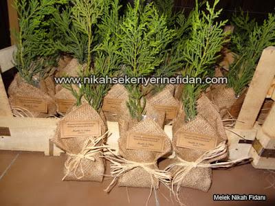 Muğla Bodrum'da Nikah Çamı hediyesi nereden alınır 3