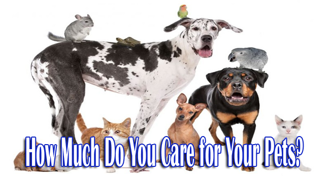 How Much Do You Care for Your Pets?