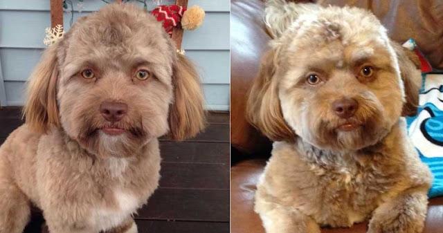 Σκύλος μοιάζει πάρα πολύ με άνθρωπο και έχει φρικάρει το διαδίκτυο