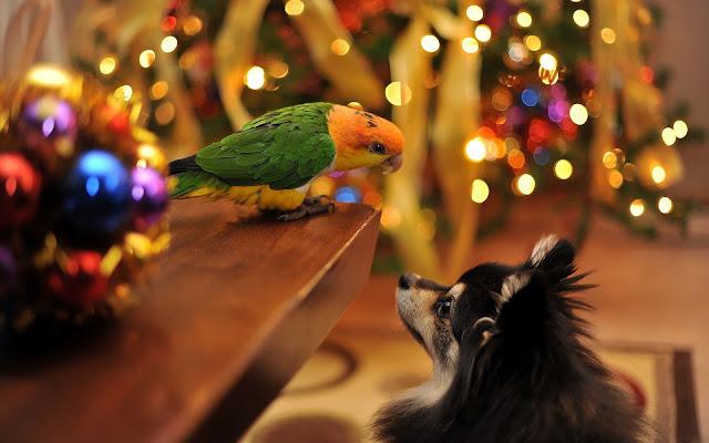 Hond en een papegaai tijdens kerst
