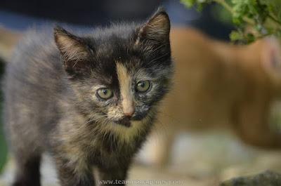 imágenes de gatitos bebes recien nacidos