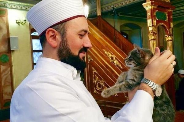Kucing dalam Tradisi Tasawuf