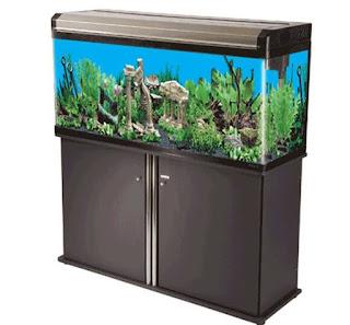 Harga akuarium di Ace hardware