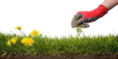 Ikuti 2 Cara ini ! Dijamin Rumput dan Gulma Tidak Akan Tumbuh Subur Di Taman Kesayangan Anda.