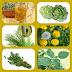 5 Plantas que nos ayudan a Drenar, y te quitan el efecto Pez Balón.