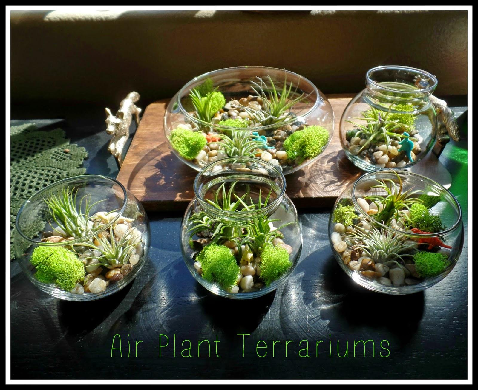 April S Homemaking Halloween Air Plant Terrarium