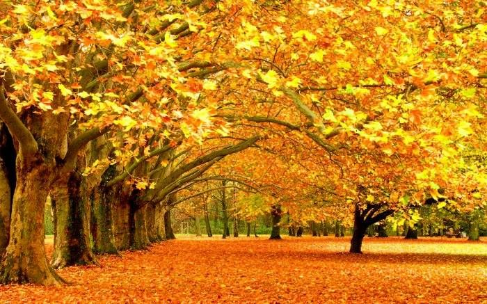 Adhy Lotongk Errobic Autumn Season Wallpapers Hd