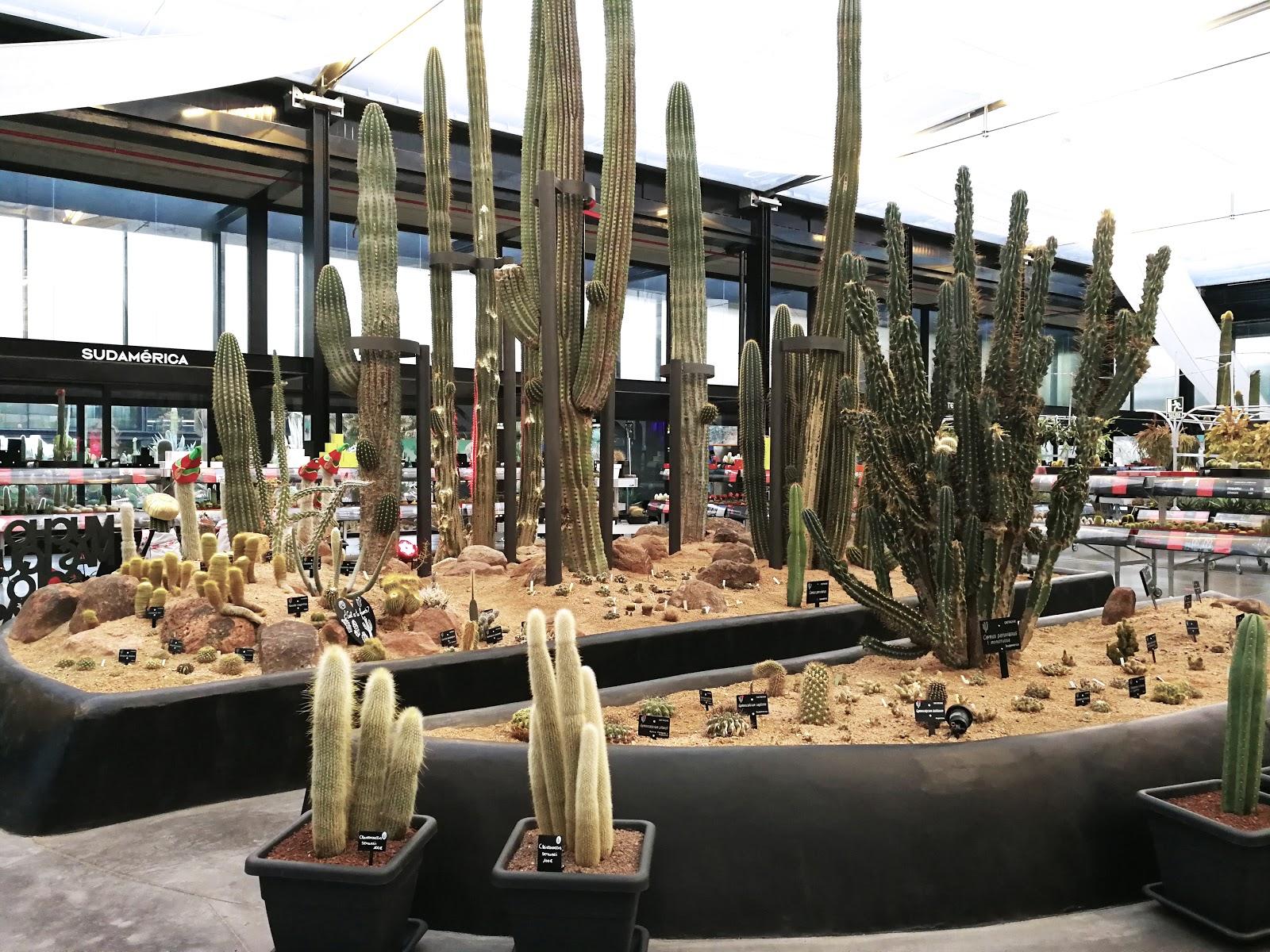 Desert city donde comprar un cactus university lifestye for Donde venden cactus