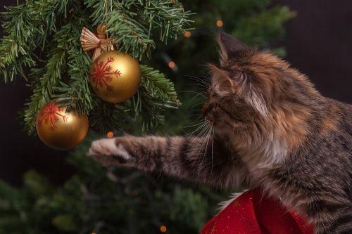 beste kerstboom test