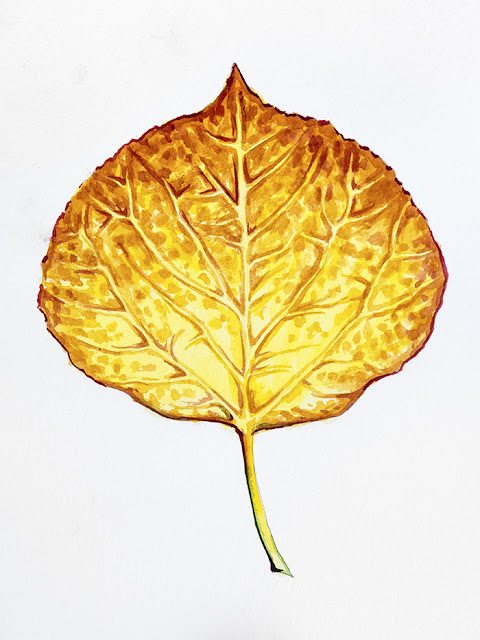http://aaronspong.com/featured/aspen-leaf-orange-and-yellow-aaron-spong.html