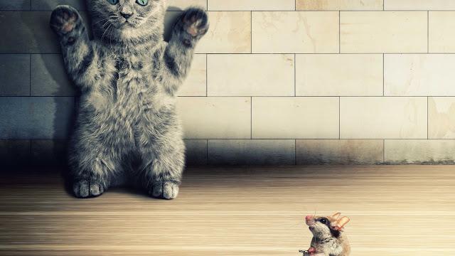 gatto, topolino, 3d,