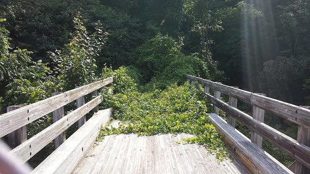 ponte-sem-saida-vegetação-final