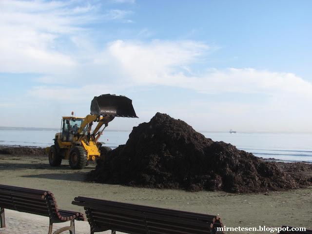 Ларнака - уборка водорослей на пляже
