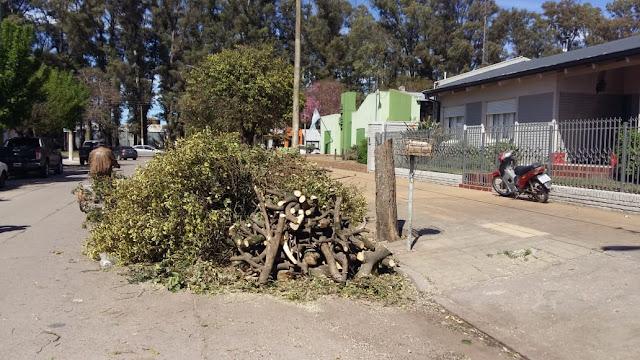 Increíble, talaron por completo tres árboles en calle Salta