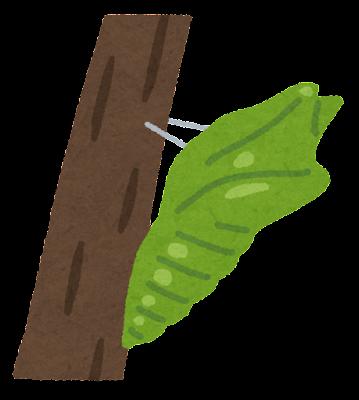 蝶のさなぎのイラスト