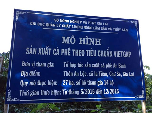 """Gia Lai: Sản xuất cà phê VietGAP, """"rung đùi"""" chờ ngày thu thành quả"""