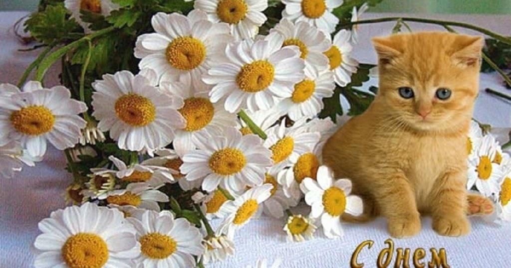 Днем, поздравления с днем рождения картинки цветы ромашки
