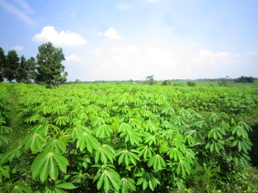 PT GREAT BIG CASSAVA: April 2012