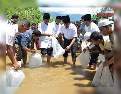 Proses Penebaran Benih Ikan Nila Ke Sungai Lokal