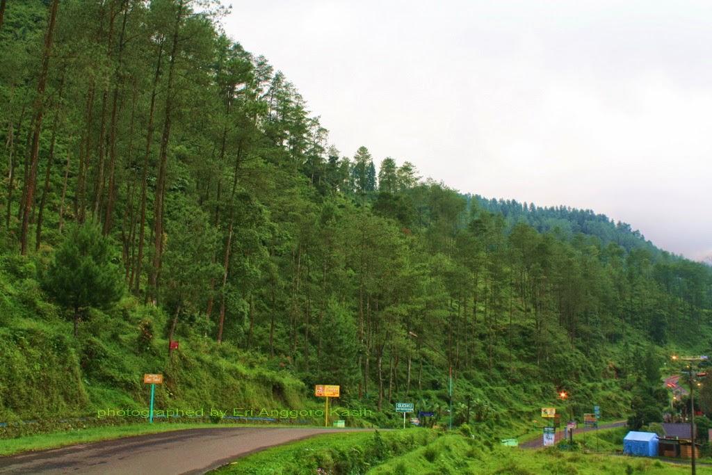 Geometri jalan yang indah menuju ke Taman Wisata Guci.