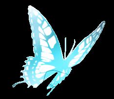 PNG #20 Mariposa Azul