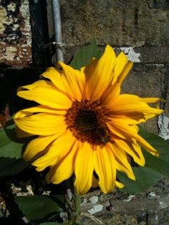 gardening, herb garden, life on pig row