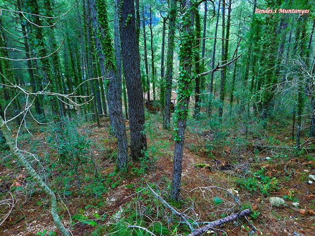Bosque de pinos al lado del aparcamiento